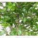 Hêtre artificiel Grandifolia