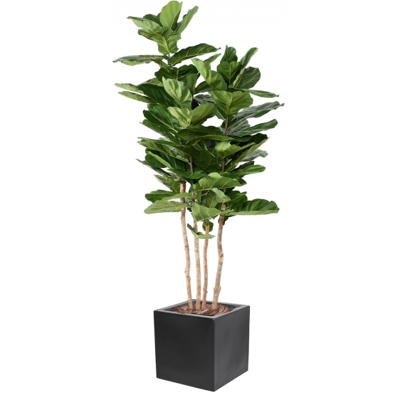Ficus artificiel Lyrata plus bac carré 40