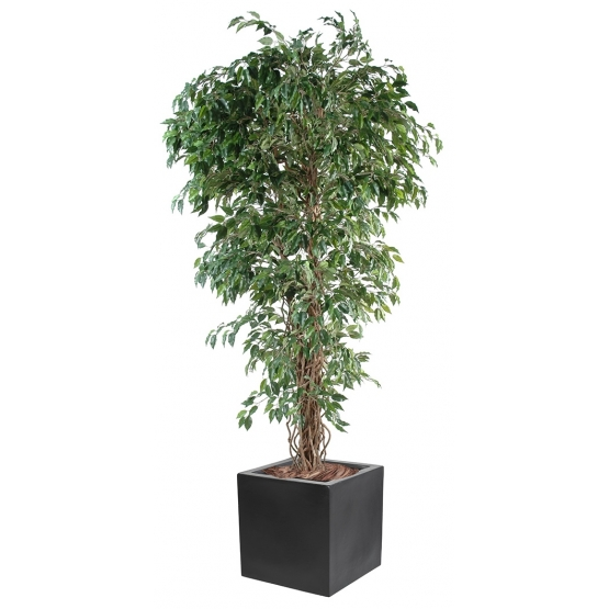 Ficus artificiel plus bac carré 40
