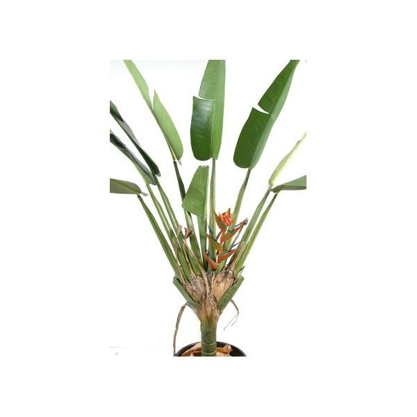 oiseau de paradis plante artificielle 200 cm 215 00. Black Bedroom Furniture Sets. Home Design Ideas