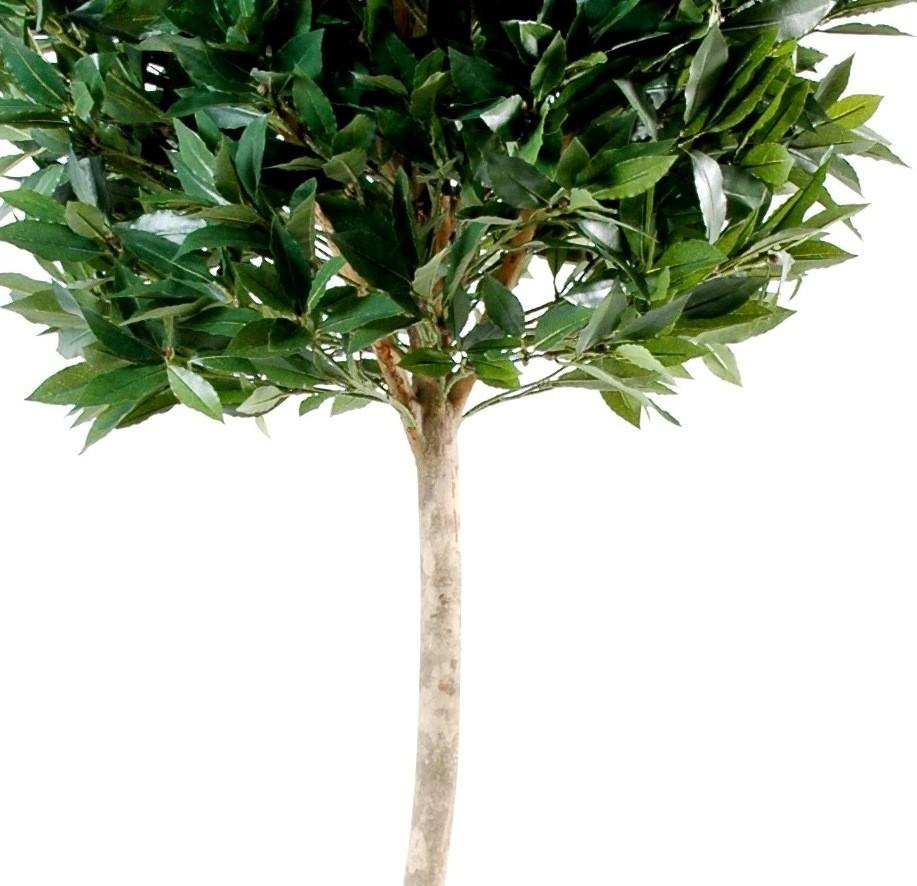 Laurier artificiel tige bois 150 cm 99 33 - Laurier tige en pot ...