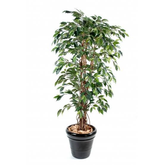 Ficus artificiel - tronc bois liane - Grandes feuilles