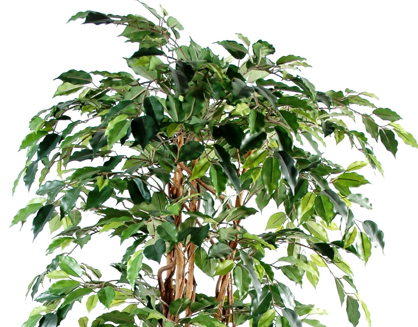 Ficus artificiel tronc bois liane grandes feuilles for Ficus artificiel