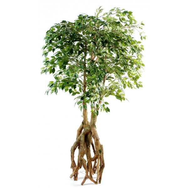 The gallery for ficus benjamina fruit for Ficus artificiel